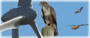 Kollisionen von Greifvögeln und Eulen an Rotorblättern von WEA