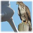 Drastischer Vogelschwund in Deutschland